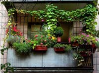 Цветущий рай на балконе