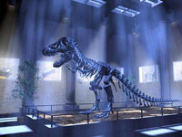 Путём динозавра