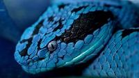 Иланский:  город у «змеиных берегов»
