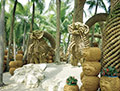 Уникальная коллекция пальм в парке Нонг Нуч