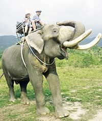 Таиланд: страна мудрых слонов  и хватких торговцев