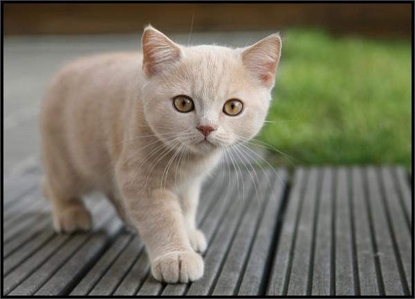 НЕИЗВЕСТНОЕ ОБ ИЗВЕСТНОМ: «Человек и кошка сядут у окошка»