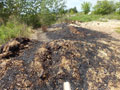 ...С другой - уже на берегу Кана - опилки, про которые мы пишем каждый год. Помойка здесь растет, причем, явно не усилиями простых горожан. Опилки горят, и никто за последние шесть лет этим даже не заинтересовался