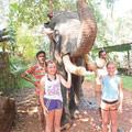 Катание на слоне очень короткий аттракцион