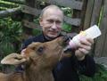 Владимир Владимирович сублимирует лосёнку маму
