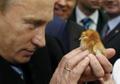Владимир Владимирович вылупляет цыплёнка силой мысли