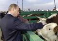 Владимир Владимирович повышает удои наложением рук