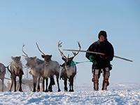 Арктические проекты требуют ревизии